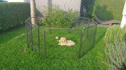 Freilaufgehege und Welpenlaufstall für Hunde