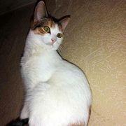 Verspieltes Katzenmädchen Ivy möchte gern