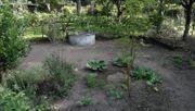 BIO-Gemüse aus eigenem Garten Nutzgarten