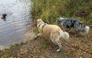 Hundepension Hundebetreuung Hundesitter Gassiservice Dogwalk