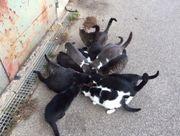 15 Streunerkatzen suchen dringend ein