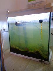 Komplettes Aquarium mit Zubehör zu