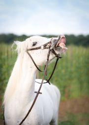 Biete Pony suche Reitbeteiligung