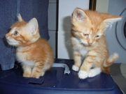 2 süße Babykitten suchen neues