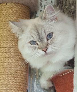 Entlaufen, Entflogen - Katze entlaufen Wer kann helfen