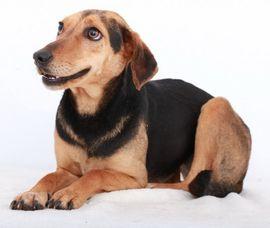 Resi geb 08 2016 lebt: Kleinanzeigen aus Trier Trier-Ost - Rubrik Hunde