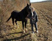 Mein 1 eigenes Pferd gesucht