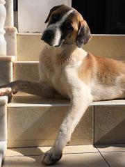 Eumel - ein toller Familienhund
