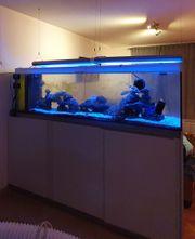 Meerwasser Riff Aquarium TOP