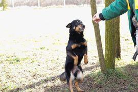 Hunde - Spell- wartet schon über 10