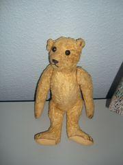 Teddy-Bär 31 cm groß