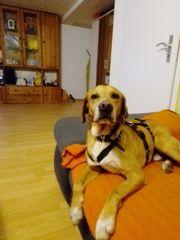 Toller Hund sucht tolles Zuhause