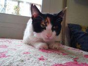 Notfall Katze Bonnie sucht ein