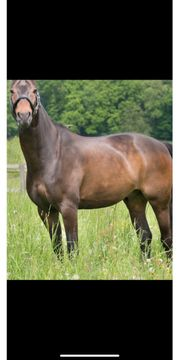 Pferde In Rosrath Pferde Kaufen Verkaufen
