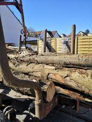 Brennholz Qualität ist unsere Stärke