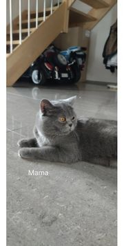Kitten Abgabebereit Katzenbaby
