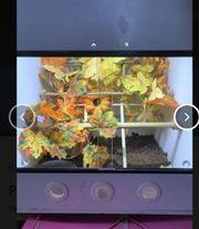 PVC Terrarium Würfel pro Würfel