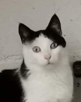 Katzen - Byakko und Seiryu suchen ihr