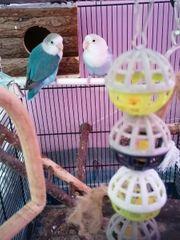 Kiki und Gogu suchen eine