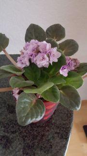 Pflanze mit Übertopf zuverkaufen