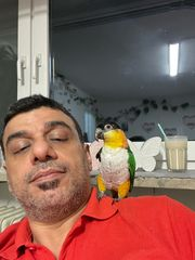 Ich verkaufe diesen Papagei weil
