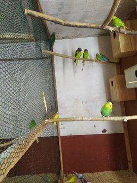 Vögel - Verkaufe oder Tausche 1 1