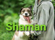 Mischlingsrüde Shaman sucht sein Traumzuhause