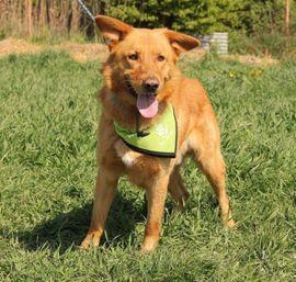 Hunde - VALENTINO - sensibel sportlich nur für