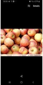 frische Äpfel golden galla
