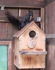 Eichhörnchen Bock von 2020