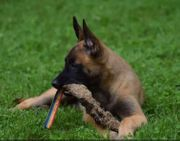 Hundeschule Passion Welpen Gruppe