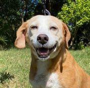 Maria der lachende Hund