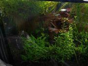 viele verschiedene Aquariumpflanzen