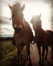 Klein Pferd
