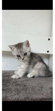 Babykatze sucht dich