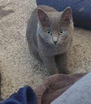 Gaissau Kätzchen wird vermisst
