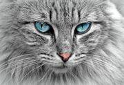 Mannheim Katzensitter gesucht Nebenjob auf