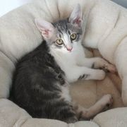 Kätzchen Pixie sucht Anschluss