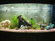 JUWEL Aquarium Vision 450 LED