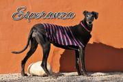 Wer möchte nun mit Esperanza