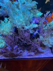 Red Sea Nano Max inkl