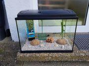 80 Liter Aquarium mit Zubehör