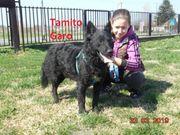 Tamito wunderschöner schlauer und aktiver