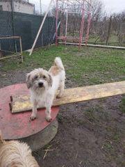 Süße Hundedame Sola sucht ihre