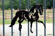 Pferdeappartement in Selm sucht neuen
