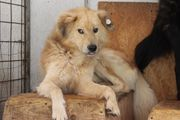 Pflegestelle für Hunde aus Rumänien