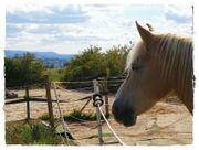 Ponyplatz im Offenstall FREI