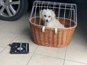 Klickfix Hundekorb für den Gepäckträger