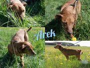 Arek wartet auf Leckerlies