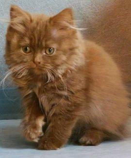 Katzen - Kleine süße Kätzchen suchen neues
